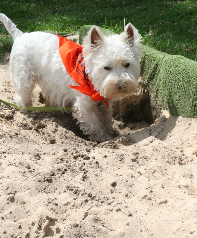 sand for pet friendly landscaping doggie sandbox